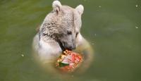 İzmir'de sıcaktan bunalan hayvanlar buzlu menülerle serinliyor