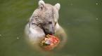 Sıcaktan bunalan hayvanlar buzlu menülerle serinliyor