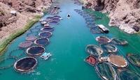Barajlardaki su ürünlerinden ekonomiye 940 milyon lira katkı