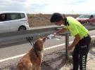 Polisler kaza geçiren köpeği su içirerek sakinleştirdi