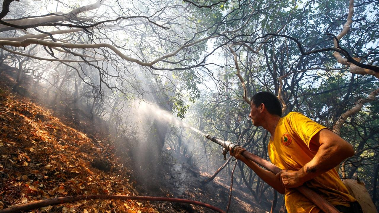 İzmirdeki orman yangınında soğutma çalışmaları