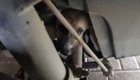 Aracın motor kısmında sıkışan köpeğin imdadına itfaiye yetişti