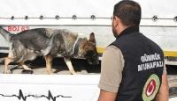 Gümrük muhafaza ekipleri 1,4 milyar liralık kaçakçılığı önledi