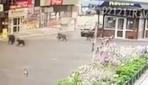 Şehre inen ayılar ortalığı birbirine kattı
