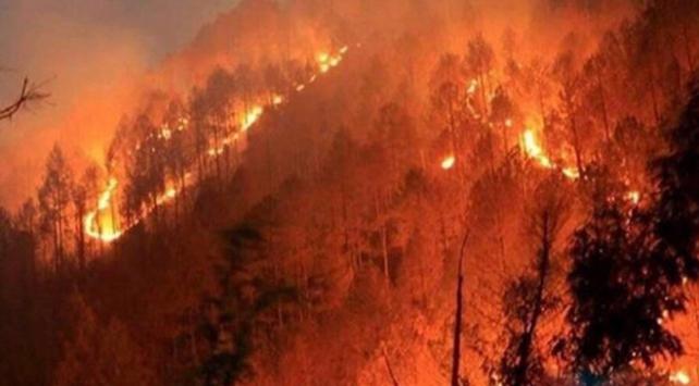 afrikada orman yangınları ile ilgili görsel sonucu