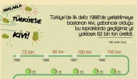 Türkiye'de 2018'de yaklaşık 62 bin ton kivi üretildi