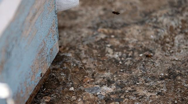 Arıların soktuğu kovan hırsızlığı şüphelisi hayatını kaybetti