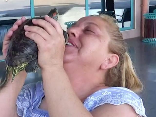 Yolculukta kaybettiği kaplumbağasına 4 gün sonra kavuştu