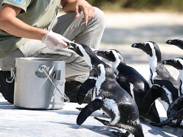 Hayvanat bahçesi sakinlerinin beslenme saati