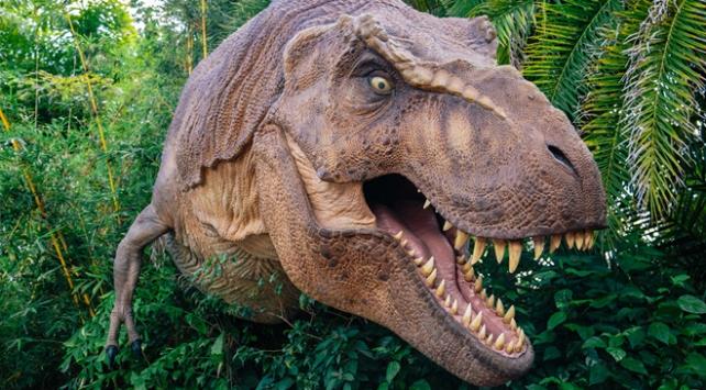 T-Rexlerle ilgili yeni keşif