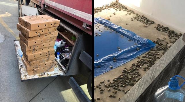 Sınır kapısında 2 bin 500 su kaplumbağası yakalandı