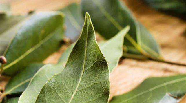 Türkiyenin şifalı bitkileri ülke ekonomisine katkı sağladı
