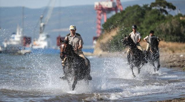 Gemlik atları TSK için özenle yetiştiriliyor
