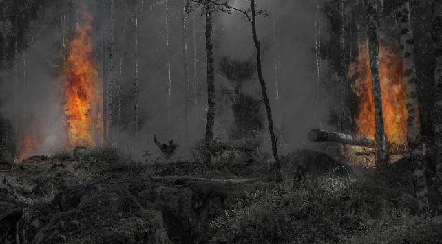 Orman yangını çıkarmaya çalışan 3 terör örgütü üyesi yakalandı
