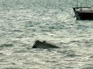 Kongo Demokratik Cumhuriyeti'nde tekne battı: 36 kayıp
