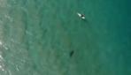 Köpek balığı saldırısı insansız hava aracıyla engellendi