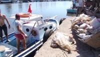 Denize atılan ölü tavukları iş yeri sahipleri topladı