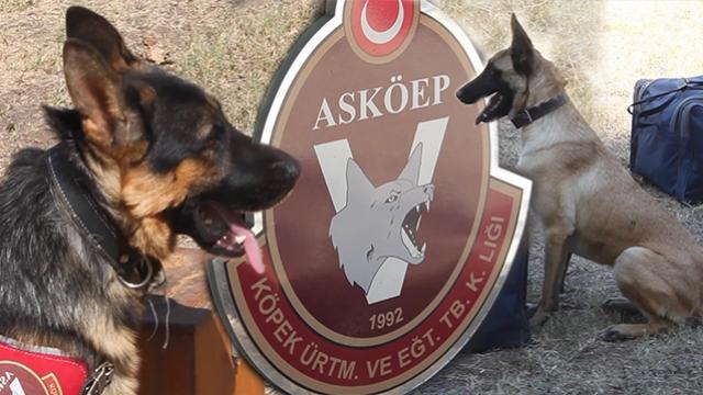 Türk Silahlı Kuvvetlerinin her an göreve hazır sevimli dostları
