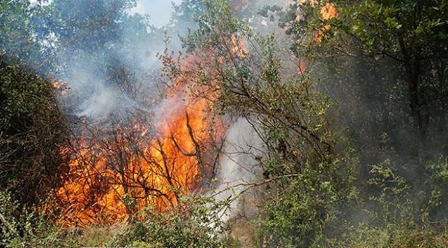İstanbul Pendik'te ormanlık alanda yangın