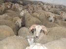 Ilgın'da hayvan pazarında veba karantinası