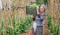 İyi Tarım ve Organik Tarım Destek ödemeleri bugün başlıyor