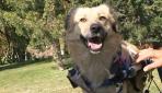 """Sevimli köpek """"Dost"""" tedavisi için yardım bekliyor"""