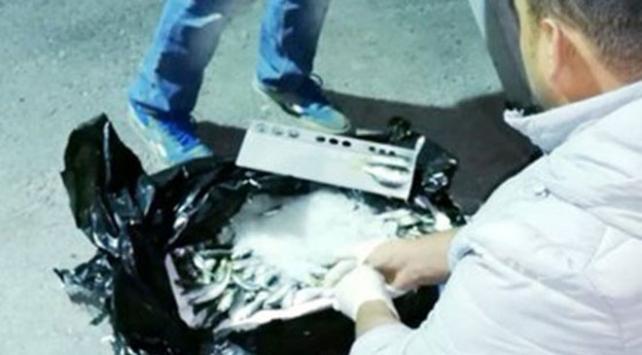 Ankarada iki otobüsün bagajında 1,5 ton kaçak balık ele geçirildi