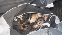 Gümrük Muhafaza ekipleri 11 yavru köpeği kaçakçıların elinden kurtardı