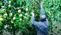 Kendini tarlasına adadı, 6 yılda 270 hünnap ağacı yetiştirdi