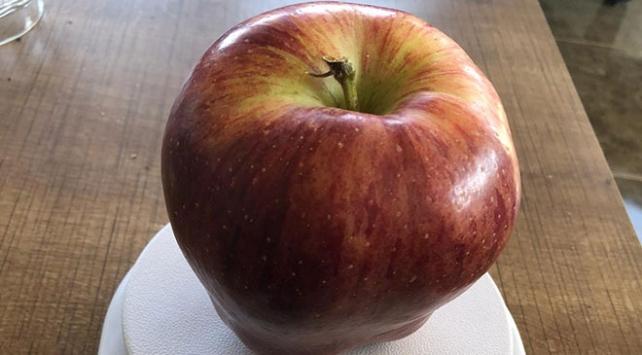 935 gramlık elma görenleri şaşırttı