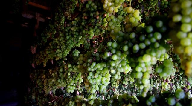Torosların zümrüdü: Yeşil gök üzüm
