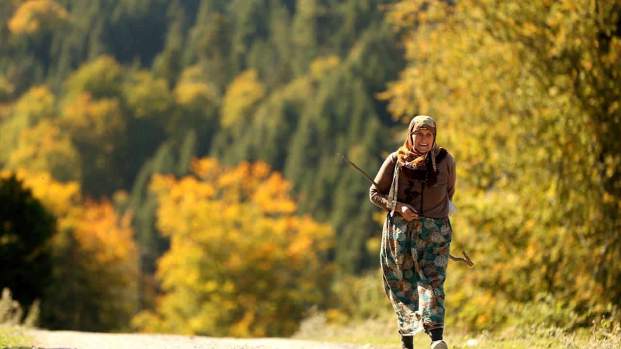 Batı Karadeniz yaylalarında sonbaharın izleri