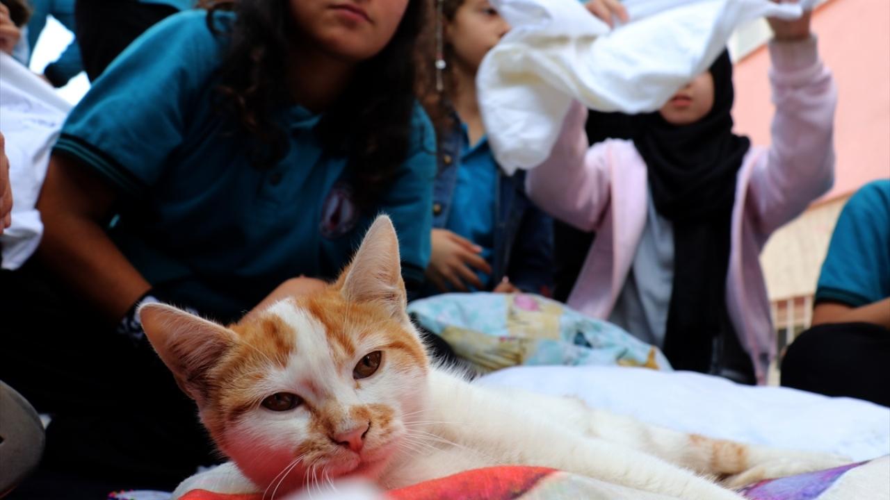 Ortaokul öğrencilerinden sokak kedileri için minder