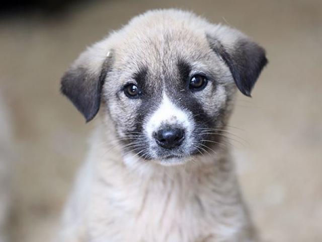 Evcil hayvanını sokağa terk edene 10 bin lira ceza