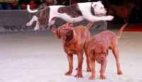 Ülkeler hayvan haklarını korumada sınıfta kaldı