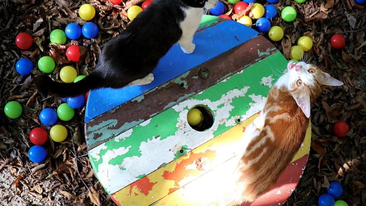 """Kasabadaki """"kedilerin"""" keyfi yerinde"""