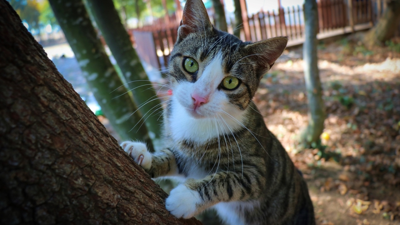 Картинки по запросу samsun kedi kasabası