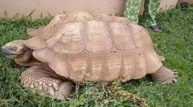 Afrikanın en yaşlı kaplumbağası 344 yaşında öldü