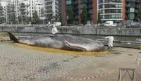 Karaya vurmuş balina heykeli ile küresel ısınmaya dikkat çektiler