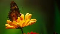 """""""Fotoğraf stüdyosu"""" gibi kelebek bahçesi"""