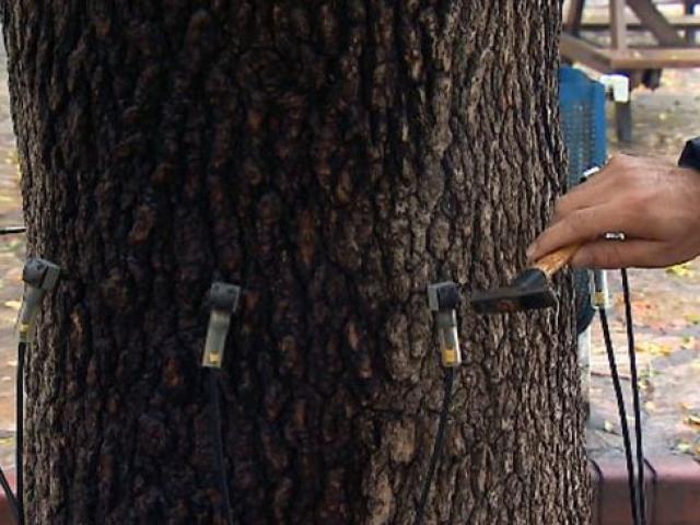 İstanbulda ses dalgalarıyla riskli ağaçlar belirleniyor