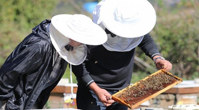 Bolunun Arı Hastalıkları Haritası çıkarılacak