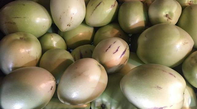 Torosların eteğinde pepino hasadı