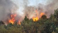 Mersin'deki Yangın Kontrol Altında