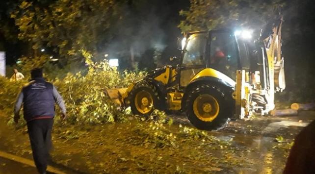 Antalyada şiddetli fırtına: Ağaçlar yerinden söküldü