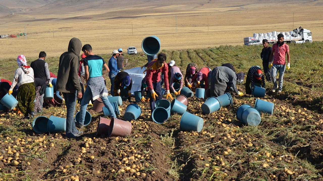 Tarım işçilerinin ekmek mücadelesi