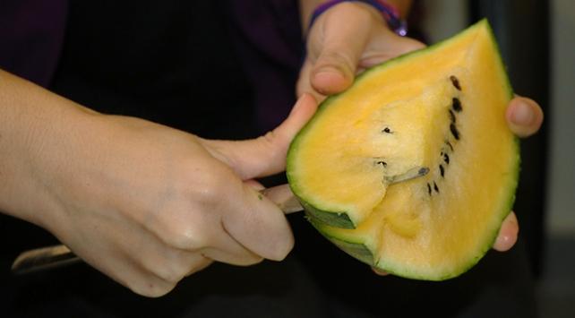Taylanddan gelen tohumla sarı karpuz yetiştirdi