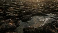 Brezilya petrol sızıntısını temizlemek için 5 bin asker daha görevlendirecek