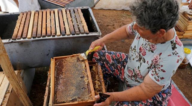"""""""Arıcıların kraliçesi"""" en iyi bal ve polenin peşinde"""