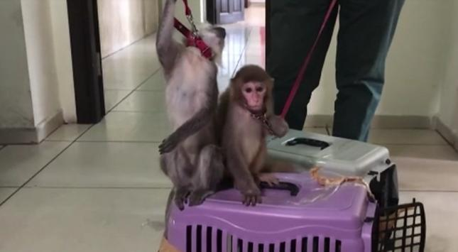 Sosyal medyadan maymun satışına gözaltı